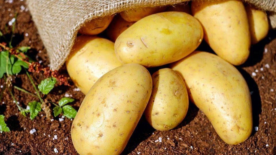 За год сбор картофеля в Кузб…