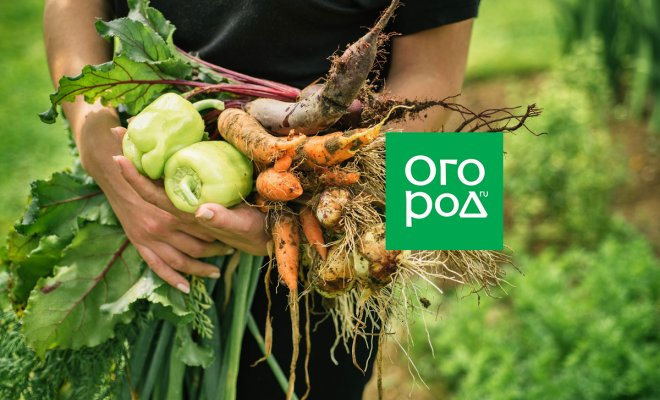 """Огородные хитрости: как отказаться от """"химии"""" на даче и при этом не потерять урожай"""