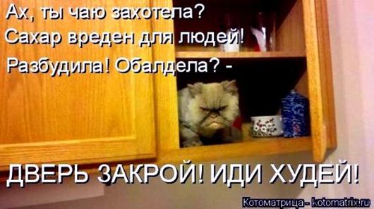 1495826330_kotomatricy-4