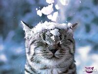 Кошки и Котята 6