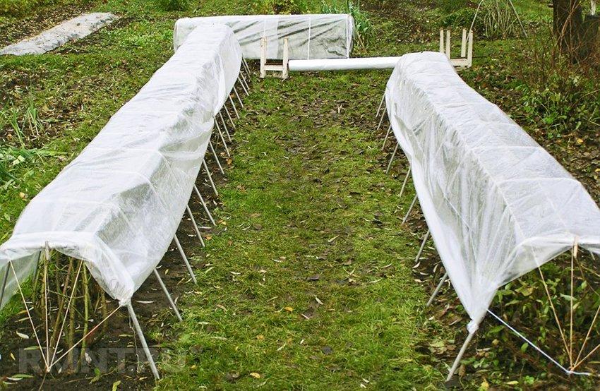 Утепление розария: как подготовить розы к зиме?
