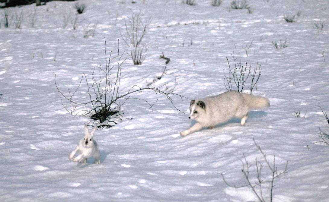 Невероятные выживальщики из мира дикой природы