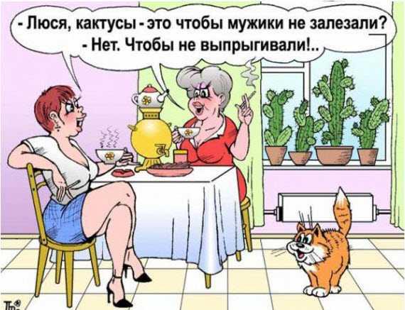 Овощной юмор и анекдоты об овощах....