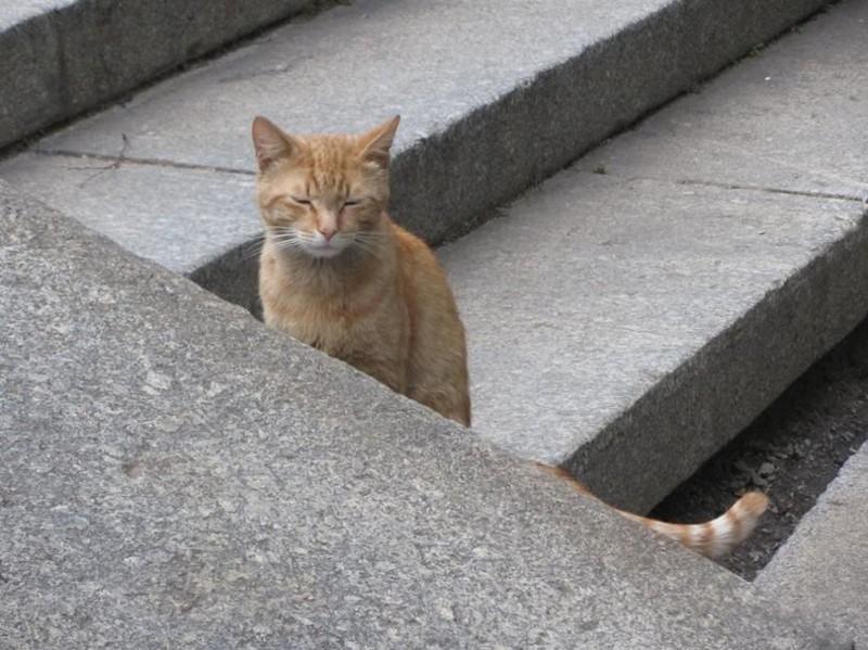 Жара бронетехника, животные, коты