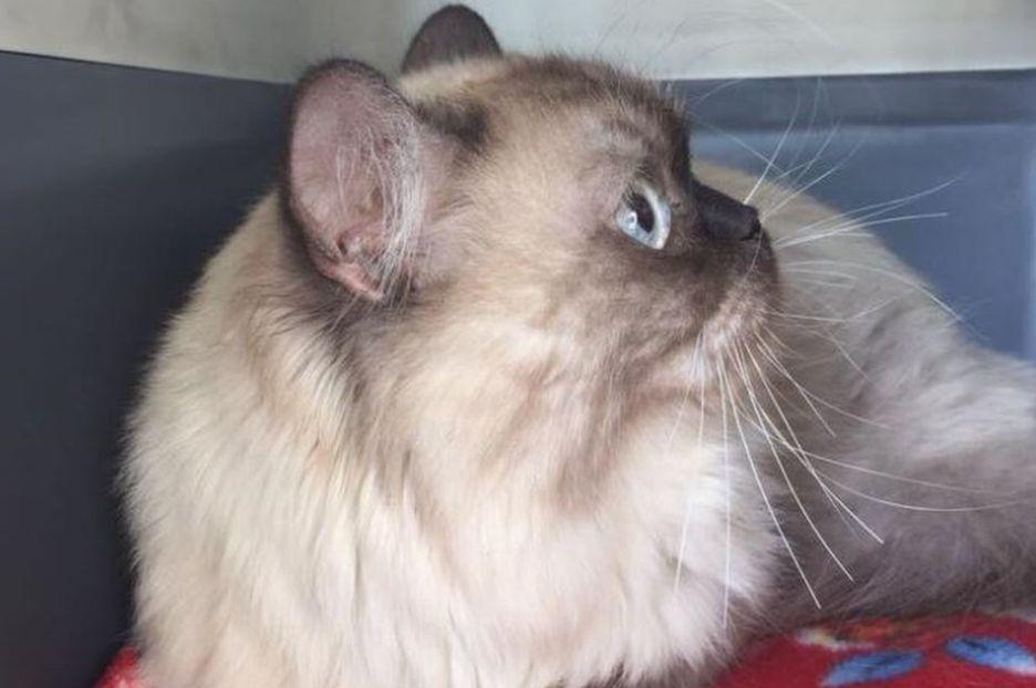 Провозгласившего независимость кота резко осудили в нерушимости европейского крепостного права