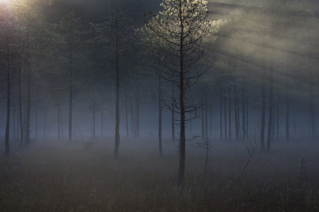 Уникальная красота дикой природы России