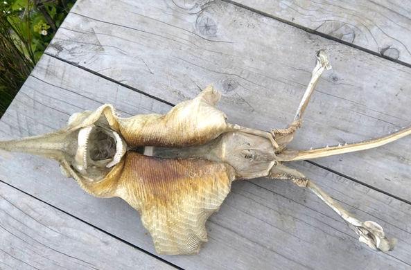Жительница Новой Зеландии нашла странное глубоководное существо