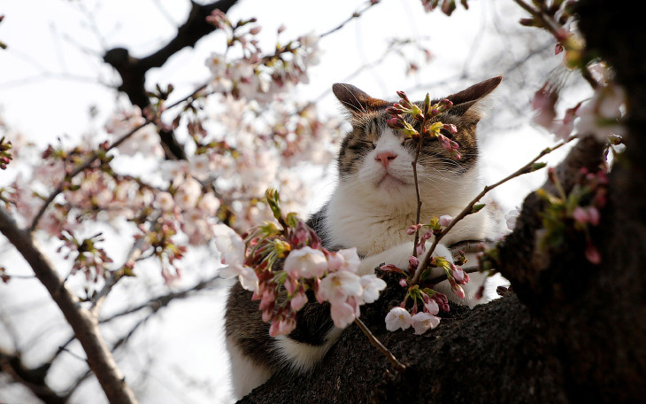 Долгожданная весна