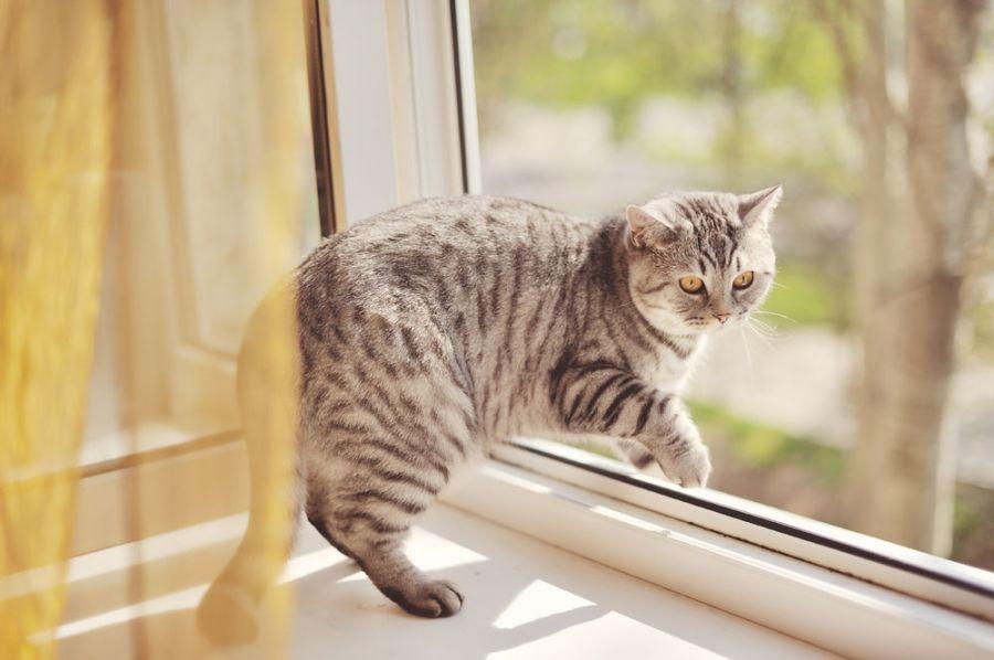 Что сделать чтобы потолстел кот