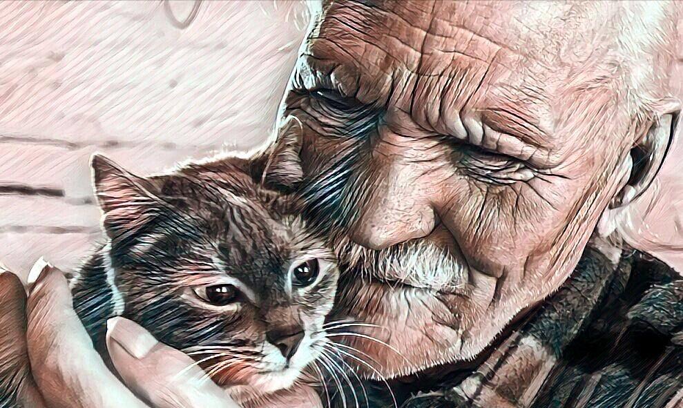 Про кота, что хозяина спас. Интересный случай
