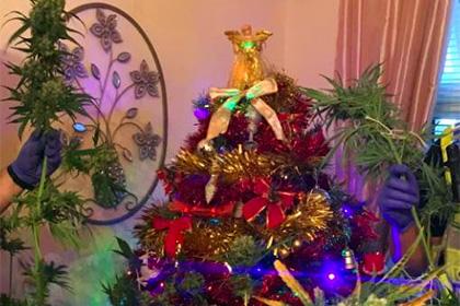 Англичане осудили полицейских за конфискацию рождественского каннабиса
