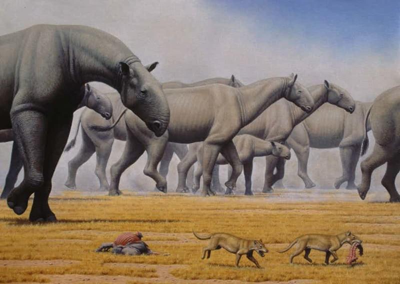 10. Индрикотерии гигант, животные, планета