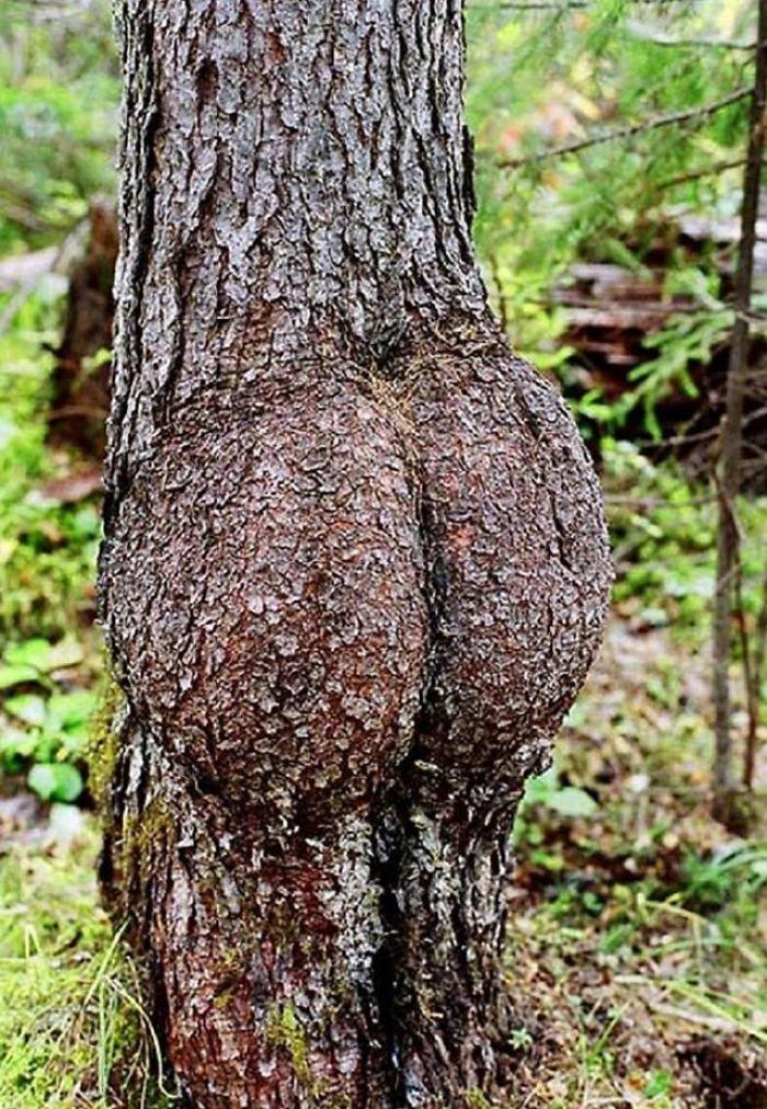 15. Дерево-задница дерево, деревья, обман зрения, парейдолия, похоже да не то же, похоже на, похоже на лицо