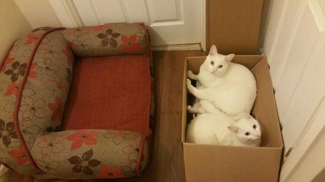 Неиссякаемый источник позитива в доме — наши любимые котики и их проделки