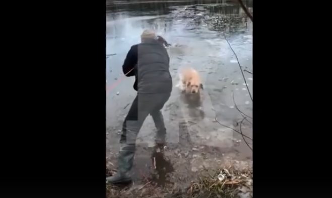 """""""С днем рождения, Арчик!"""": спасение провалившейся собаки попало на видео"""