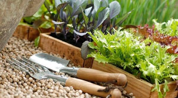 Когда начинать высаживать семена на рассаду