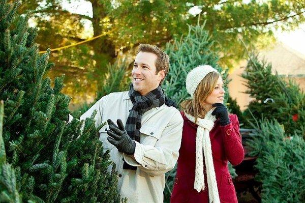 Выбираем натуральную елку