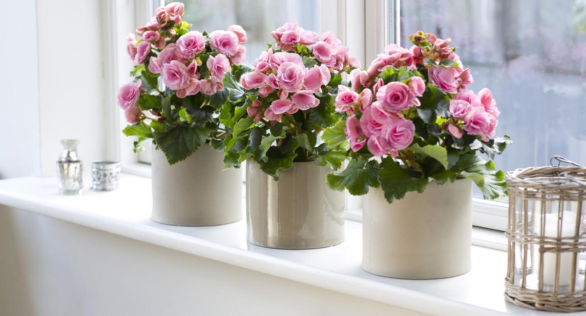 10 лучших красивоцветущих комнатных растений и секреты их выращивания