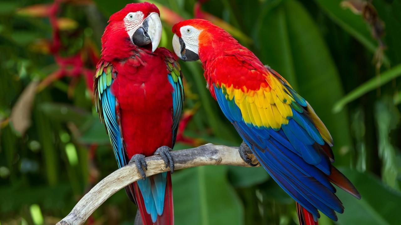 Живые обои на рабочий стол попугаи