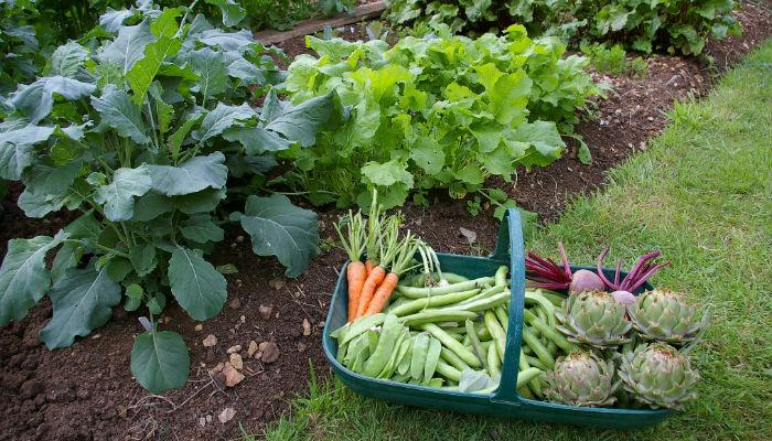 Полезные советы от огородников