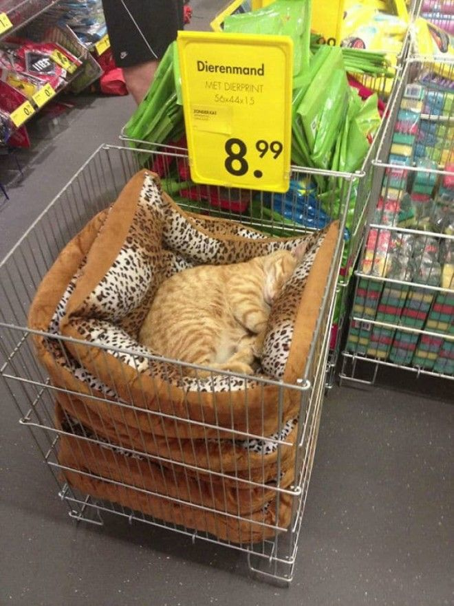 Just A Chilling Cat Giving Zero Fcks In A Local Store