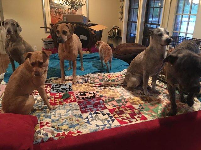 Люди, которые не смогли предать и бросить своих 14 собак