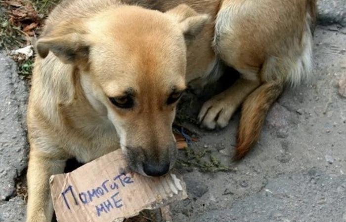 Бросил питомца - садись в тюрьму: в Италии борются с безответственными хозяевами животных