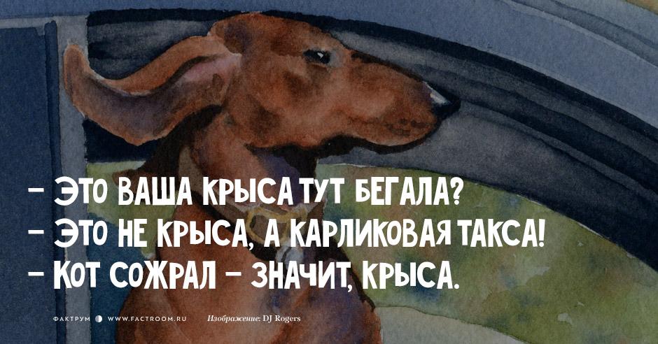 анекдоты, фразочки, картинки...)))