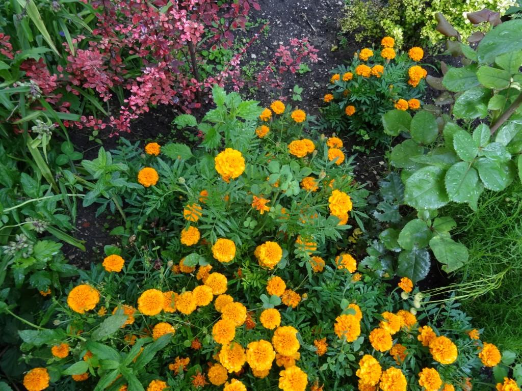 Какие многолетние цветы посадить под зиму фото