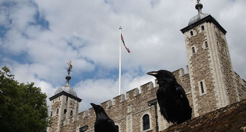 800px two ravens and the tower of london