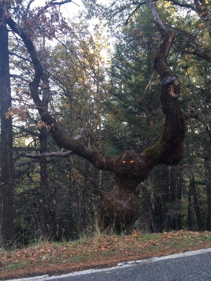 5. Тому, кто присобачил к этому дереву глаза: ну ты гад! дерево, деревья, обман зрения, парейдолия, похоже да не то же, похоже на, похоже на лицо