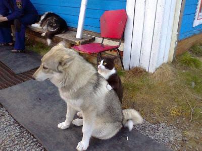 Пацаны, это же собака! Настоящая СОБАКА! Матерь божья, она такая мягкая!