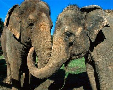 Поздравим слонов с праздником!)