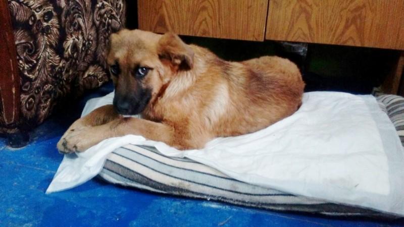В Новочеркасске молодая пара спасла щенка, которому живодеры сломали лапы