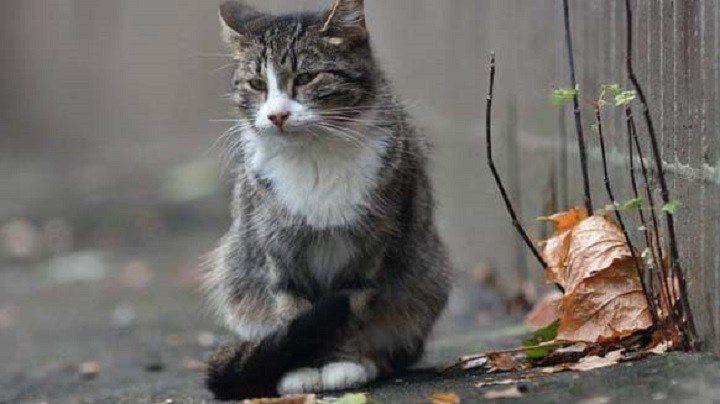Кот, который две недели ждал…