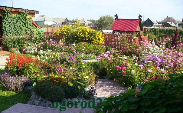 Однолетние цветы, цветущие все лето без рассады - название и фото