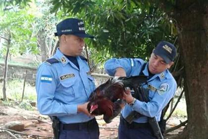 В Гондурасе петуха посадили в тюрьму
