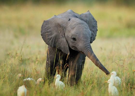 У слонов очень хорошая память