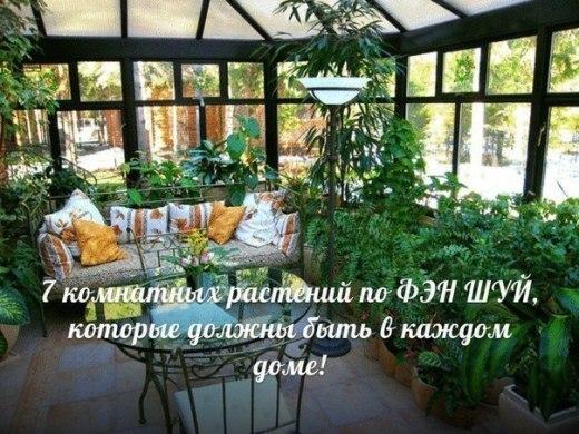 7 комнатных растений по ФЭН ШУЙ, которые должны быть в каждом доме