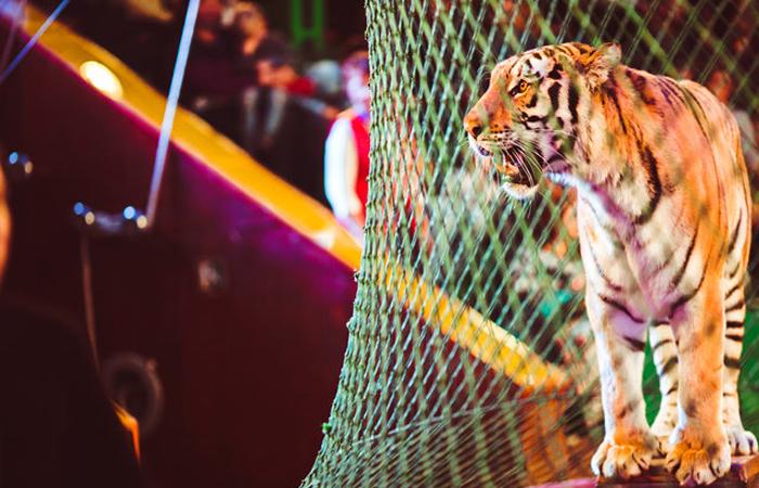 """""""Диким животным в цирке не место!"""": активисты добились запрета на использование зверей в представлениях"""
