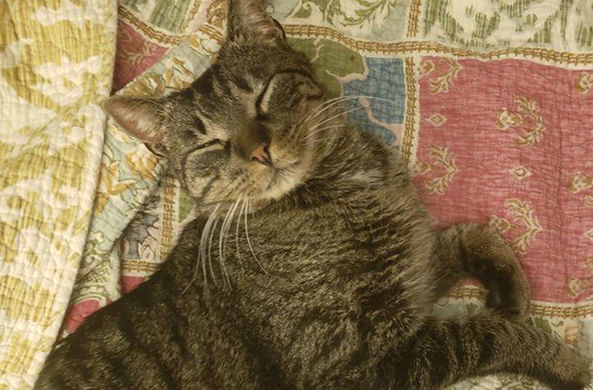 Кот ушел на прогулку и вернулся спустя пять лет