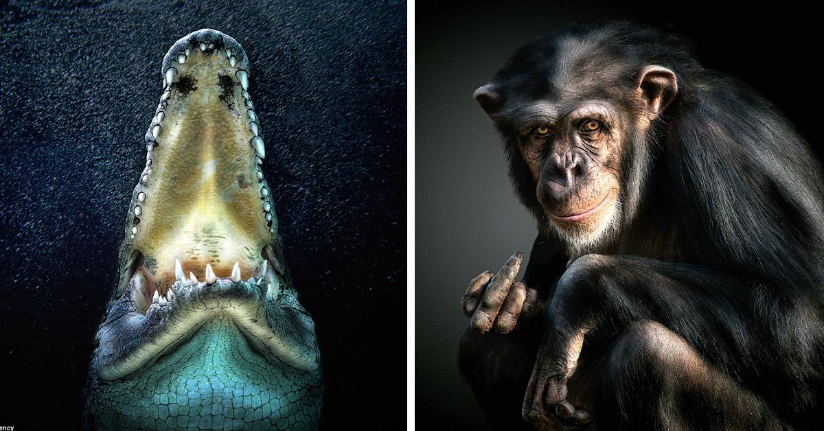Идеальные кадры: фотография диких животных как искусство