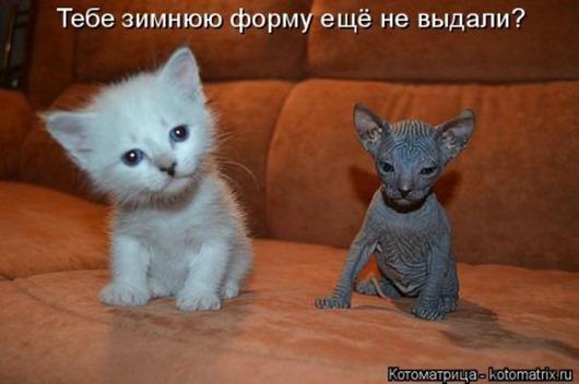 1483107350_kotomatricy-12