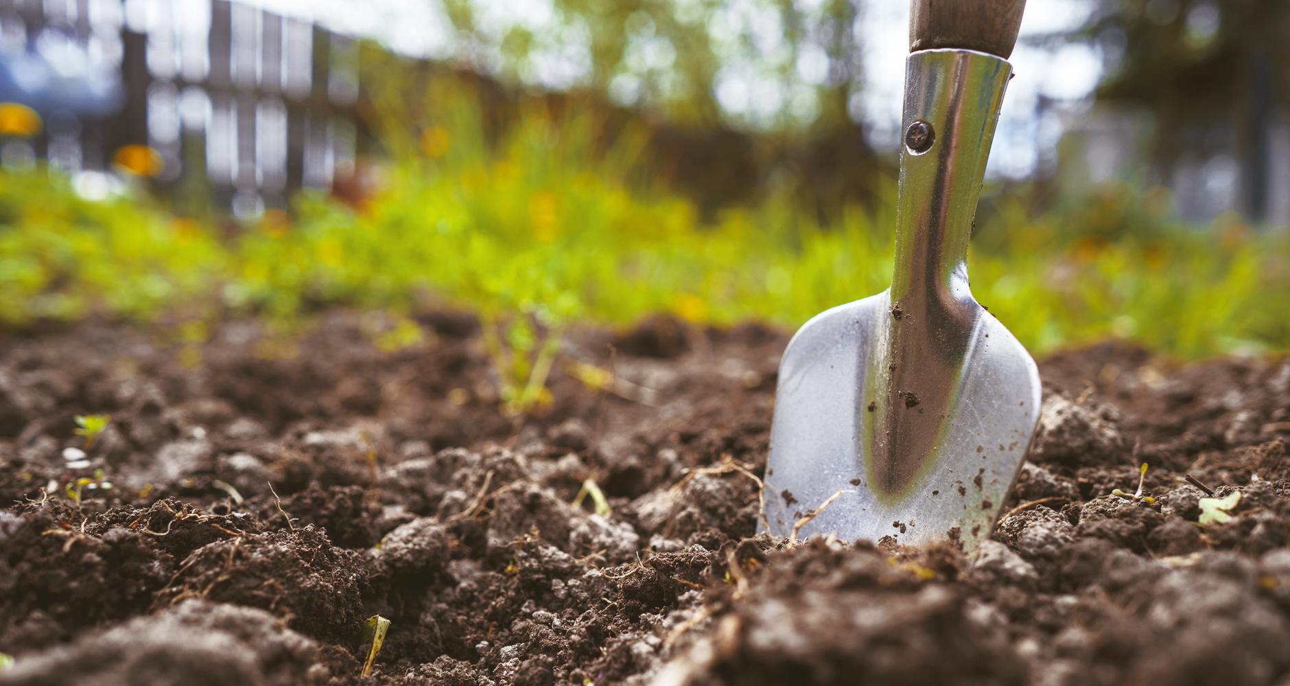 Чем обеззаразить почву после урожая