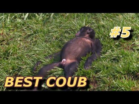 BEST COUB Лучшие кубы #5