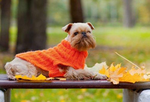 Топ-25: Самые маленькие собаки в мире