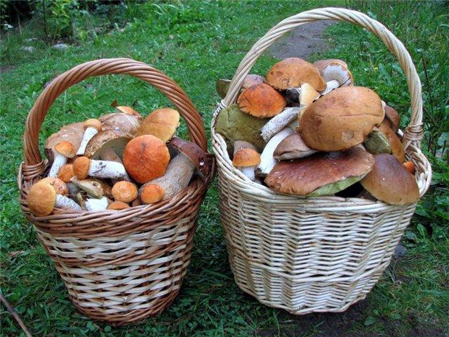Выращивание грибов на даче