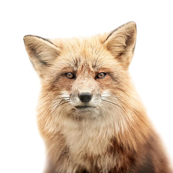 Портреты животных Мортен Колдби