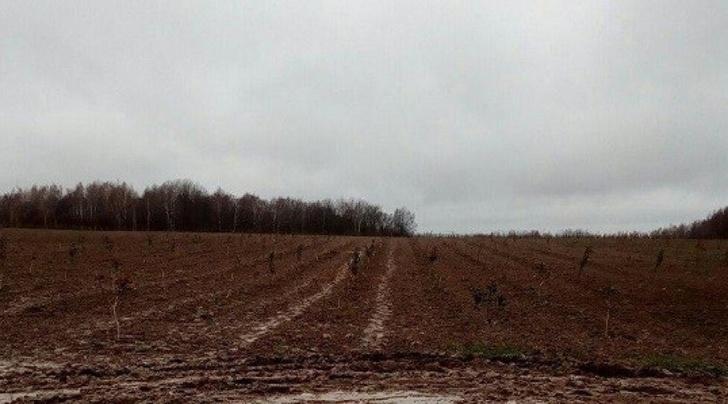 Возрождение яблоневых садов начато в Калужской области