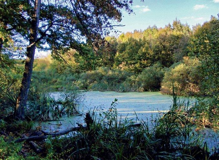 Легенды озера Берестоватое